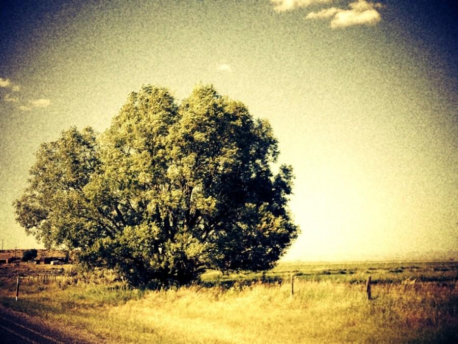 Pastoral Road Tree