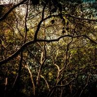 Bryant Park Sycamores | Blurbomat.com