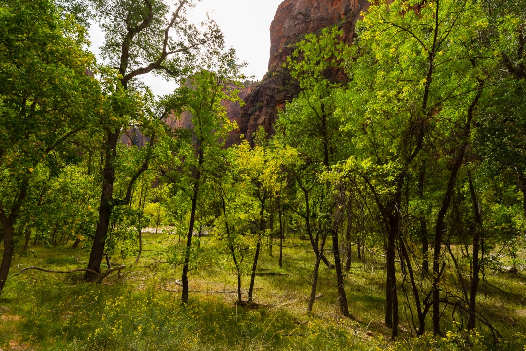 Riverbed Trees in Zion National Park by Jon Armstrong for Blurbomat.com