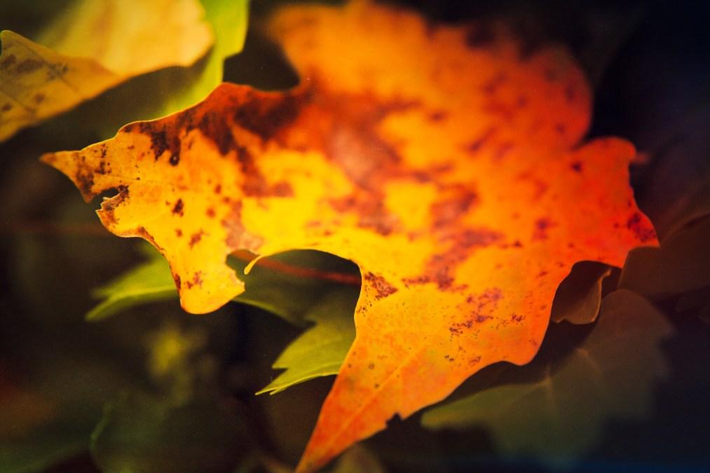 Fun with Macro: Autumn Leaf