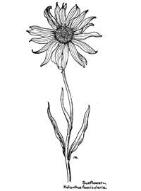 Sunflower-Coloring-Art_DIY_DigitalPapercrafting