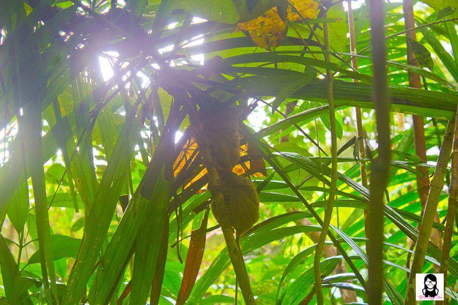 Philippine Tarsier and Wildlife Sanctuary - Top 10 Tourist Spots to Visit in Bohol, Philippines | Blushing Geek