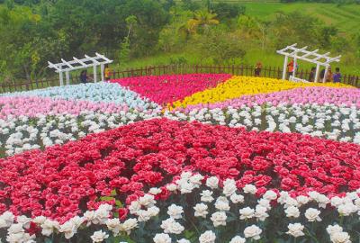Jardin Necitas – Amazing Glowing Garden in Bohol | Blushing Geek
