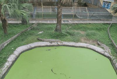Exploring Davao Crocodile Park | Blushing Geek