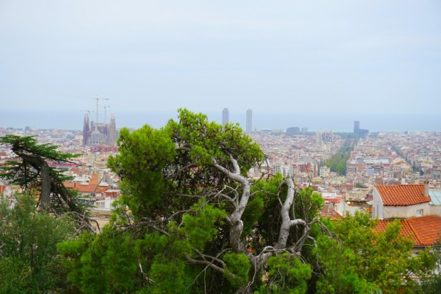 View of La Sagadra Familia from Park Guell. You can see the cranes because it is still under contruction.