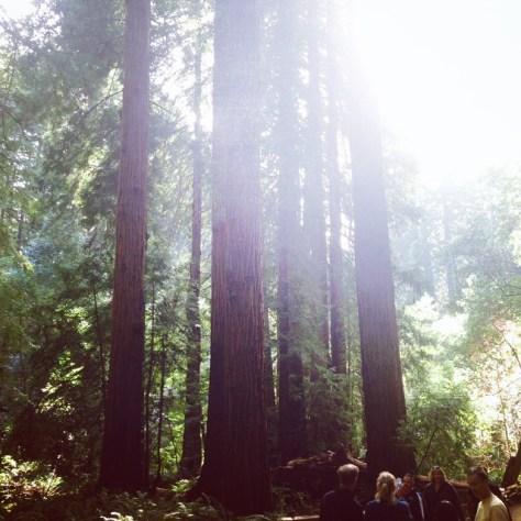 muir-woods