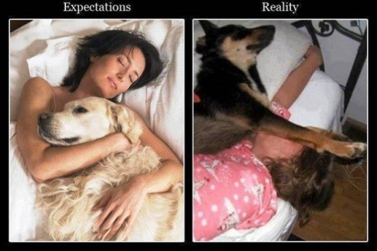 These Expectations Vs. Reality Will Make You Laugh 9