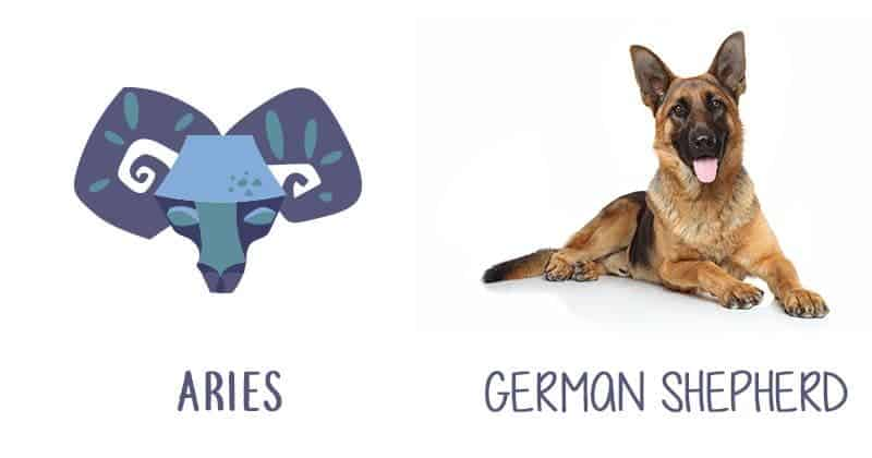 Dog compatible with your zodiac sign