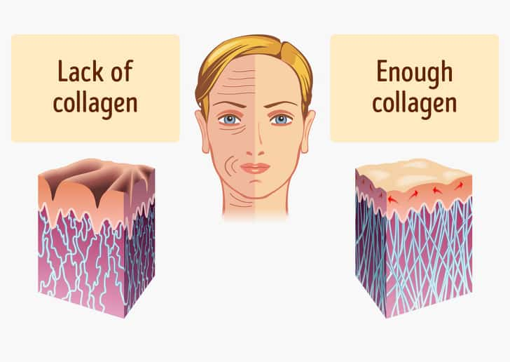 Collagen Rich Foods That Prevents Your Early Ageing 4
