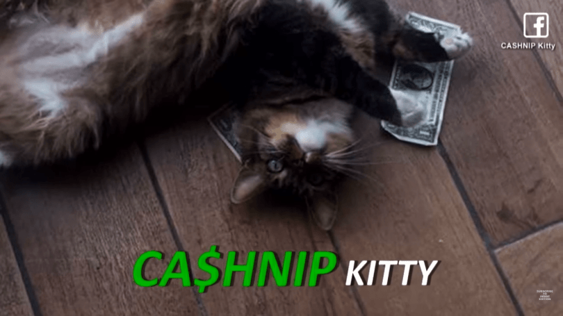 Cat Collects $1 From Each Passerby To Donate 8