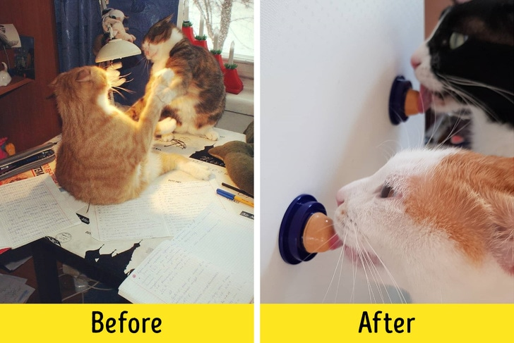 10 Best Life Hacks That Will Make Life Easier Of The Cat Owner 2