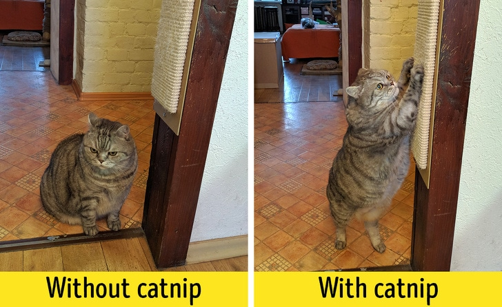 10 Best Life Hacks That Will Make Life Easier Of The Cat Owner 8