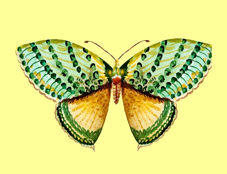 6 Hidden Facts Regarding Personality With The Choice Of Butterfly You Like 4