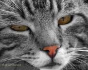 Sesamo, il gatto della mia vicina - (Photo Editing)