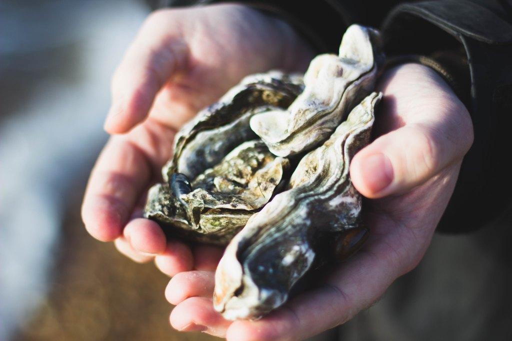 牡蠣 殻付き