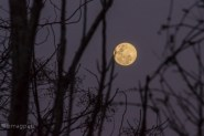 Full moon on the rise