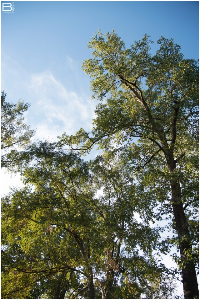 Nacogdoches photographer thoughts on perspective with image of trees and blue sky