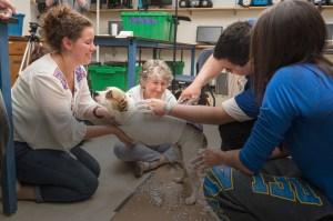 Bretta Fylstra – Prosthetic Dog Leg