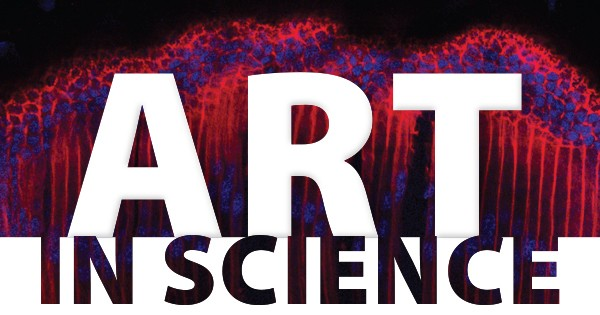 Art in Science