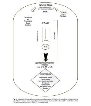 Biobehavioral Mechanisms Explaining Disparities Lab