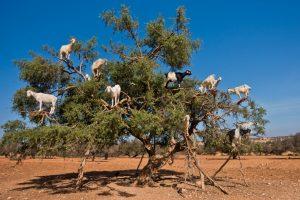 Bizarro World: The Herd Has Truly Gone Mad | BullionBuzz