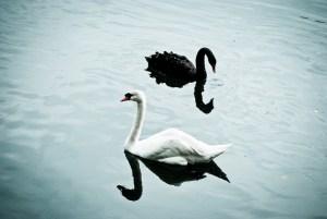 Black Swans, Ordinary Swans and Metals | BullionBuzz | Nick's Top Six