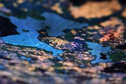 Marni Sternberg, (Pop of Color) Photography-Gold Key