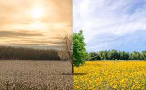 Environment change and ecology global warming drought or refreshing tree. Photo illustration purchased from BigStock.com.