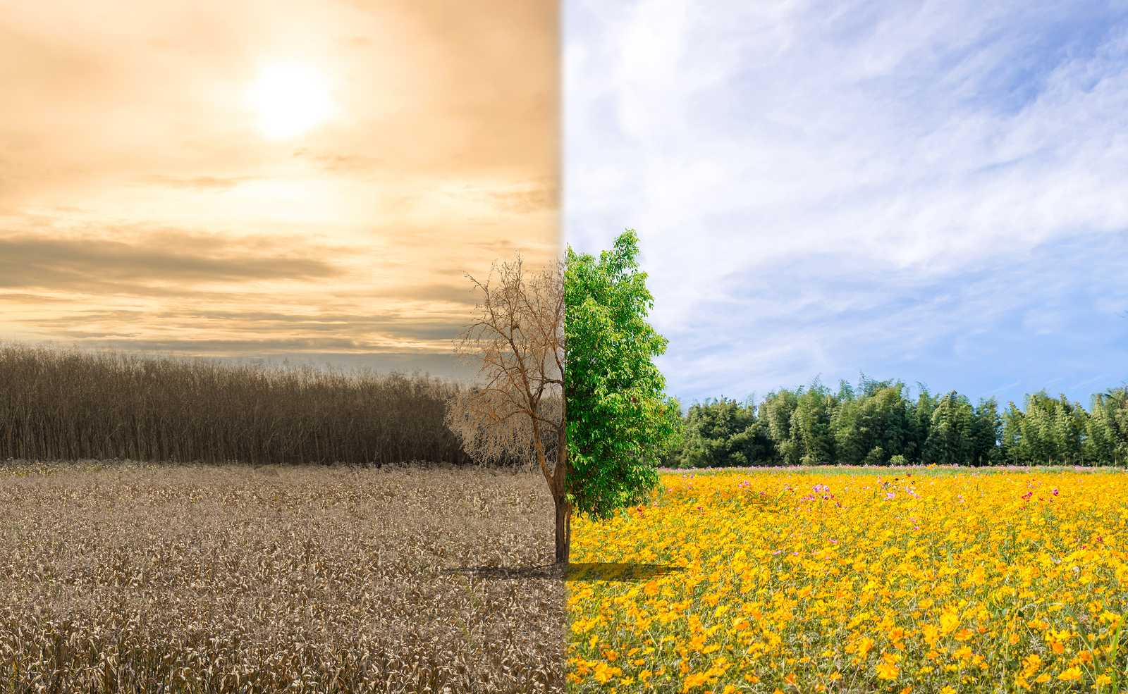 bigstock-Environment-Change-And-Ecology-259300567.jpg