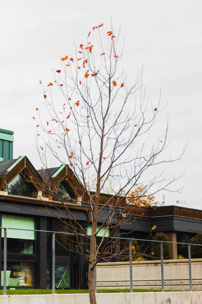 The leaves begin to change colors and fall in front of the Chase Building.