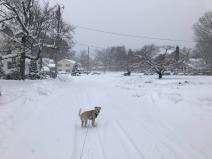 Math Department Chair Nancy Bradley took her dog Bailey for a walk in the snow.