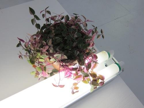 leaves-on-bulb