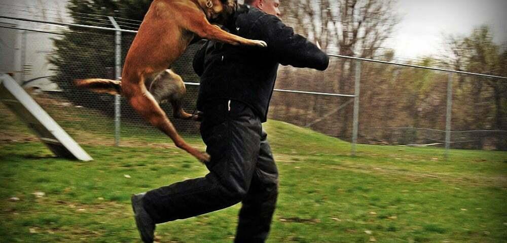 Что делать при нападении собаки?