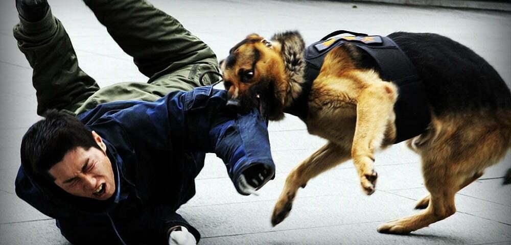 Что делать при нападении собаки? Часть 2