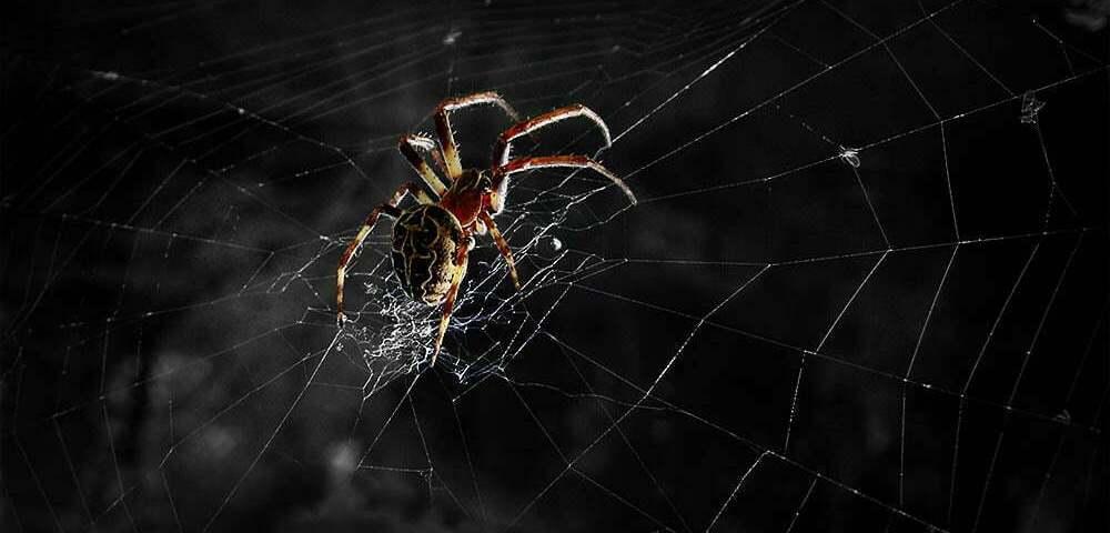 Кошмар арахнофоба. Часть1: Смертоносные пауки