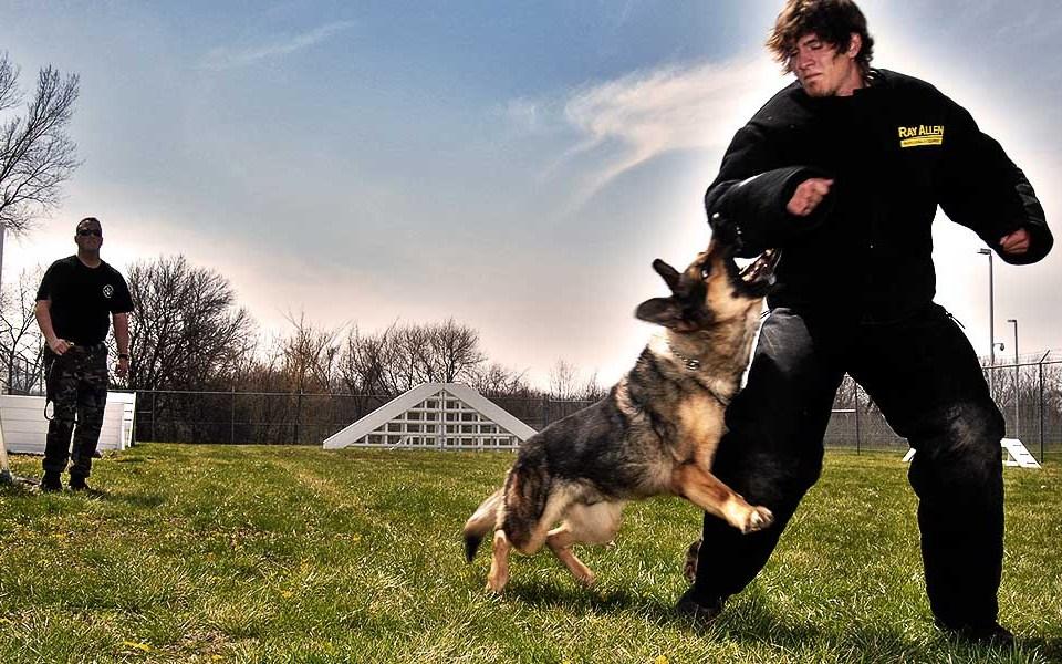 Как реагировать, если на вас нападает собака
