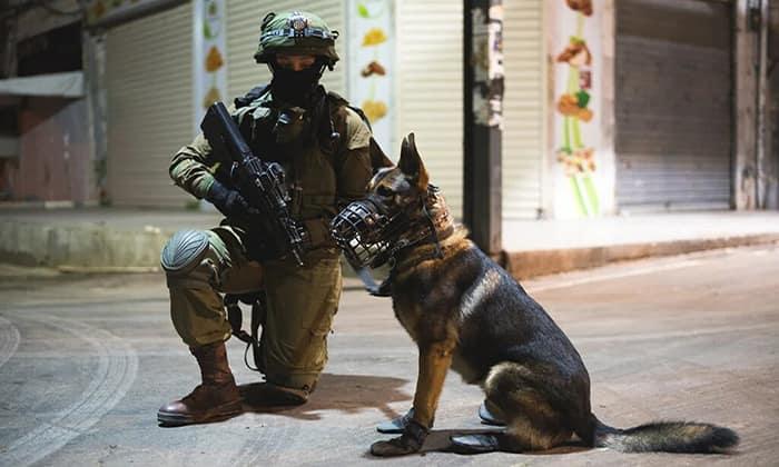 Боевые псы израильского спецназа «Окец»