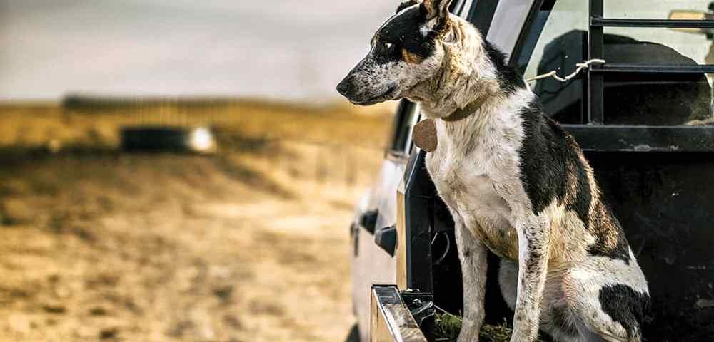 Краткий курс первой помощи собаке, подготовка её к выживанию