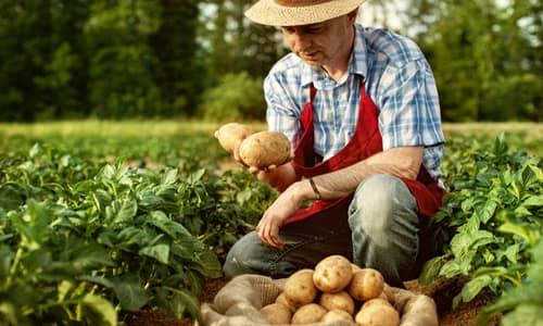 Фермеры и скотоводы - «Професии апокалипсиса» - 9 самых важных специальностей после БП