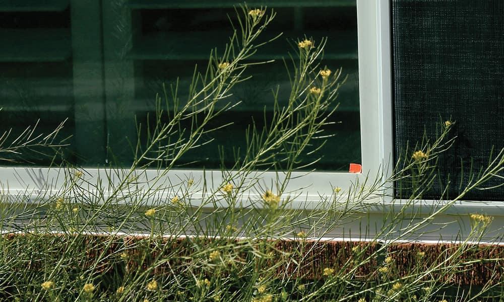Небольшой прямоугольник клейкой ленты, неприметно наклеенный в углу окна, также позволит получателю узнать, что для него кое-что есть...