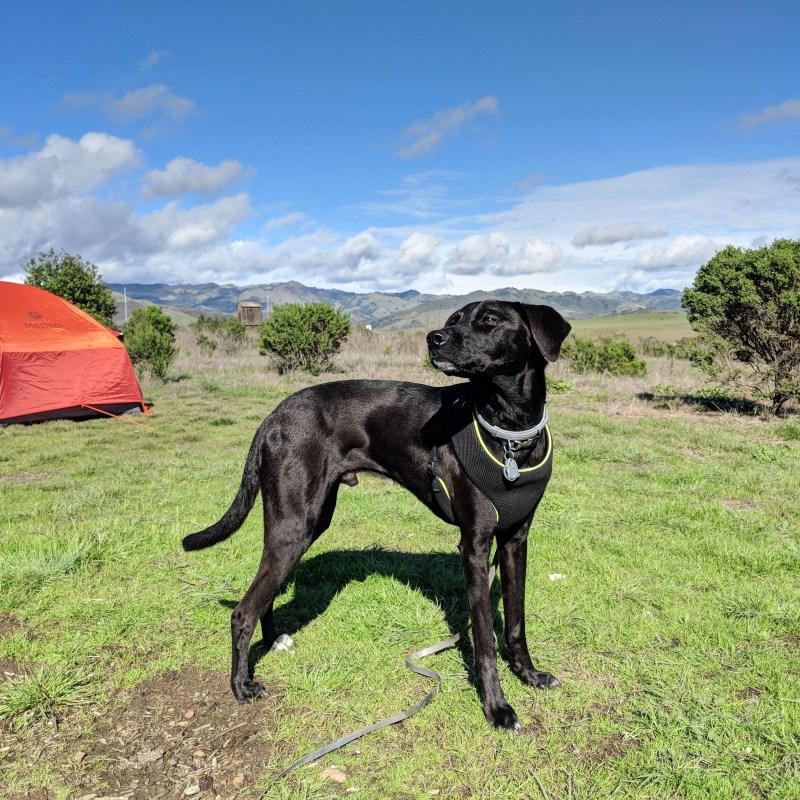 Dog in Hearst San Simeon State Park