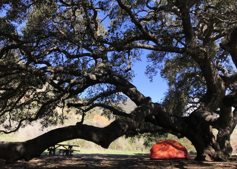 tent under big tree at Leo Carrillo State Park