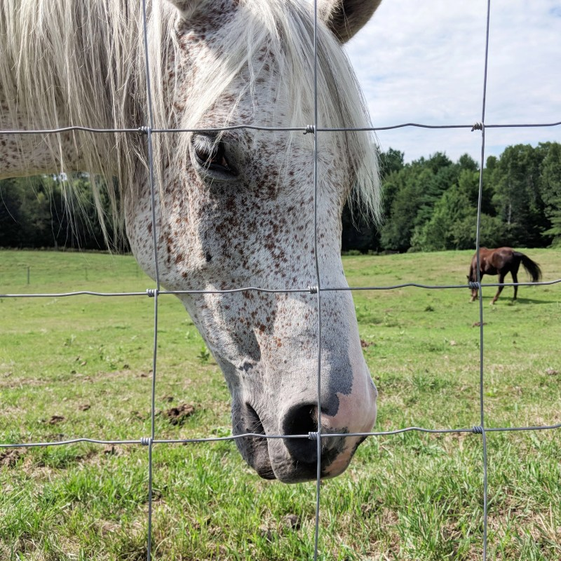 white horse at Cherry Valley Farm Airbnb