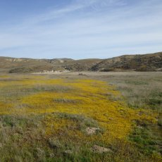 Spatial phylogenetics of the native California flora