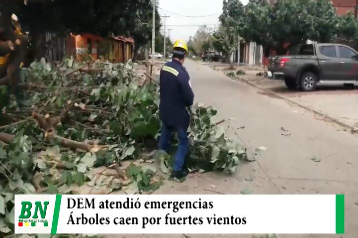 Árboles caen por fuertes vientos y DEM ayuda en los barrios afectados