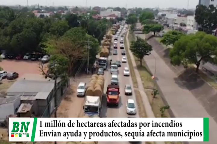 Un millón de hectáreas afectadas por incendios forestales y envían ayuda en productos y herramientas