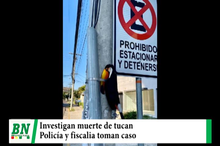 Muerte de tucan que fue puesto en poste de luz se investiga y denuncia llega a policía y fiscalia