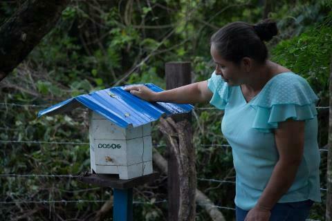 Abejas del Chaco endulzan a los consumidoresde Bolivia y la vida de 342 productores