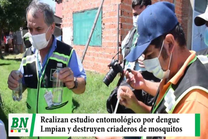 Realizan estudio entomológico por el dengue y destruyen criaderos de mosquitos