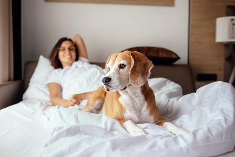 Hard Rock Hotels All Inclusive presentan su nuevo programa de residencia para mascotas y desde ahora se suman a la tendencia Pet Friendly